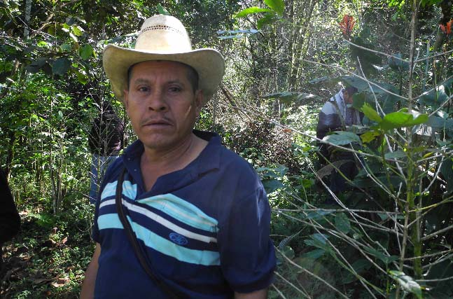 Andres Torres Mendoza owns one hectare of land, located at 1,300 meters planted with Bourbon, Catuai and Catimor coffee varietals.