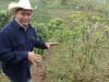 Neighboring fields without intensive organic treatment suffer from the roya epidemic affecting most of Central America.