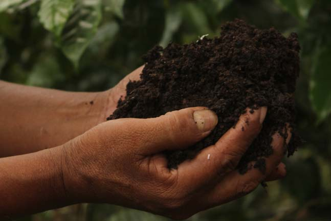 Intensive organic practices, including worm-composting and the propagation of micro-organisms for better nutrient absorption and diversified micro-biological life in the soil.