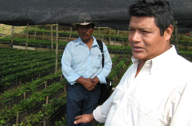 Pablo Vazquez and Maya Vinic Commercial Manager Antonio Ruiz explain the work of organic promotion, including this community managed tree nursery and trainings in the field.