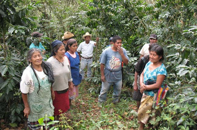"Hilaria Ramos Hernandez, a 72-year-old single widow, leads a visit to her fields. ""Me encanta la cosecha... this is the only work I have to sustain my life here,"" she added."