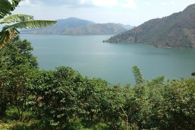 The coffee farms of Muungano Coffee Cooperative, located in the mountains of Eastern Congo,on the shores of Lake Kivu.