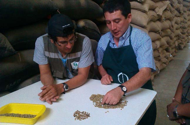 This special preparation requires a strict and consistent quality control during harvest, drying and final selection.