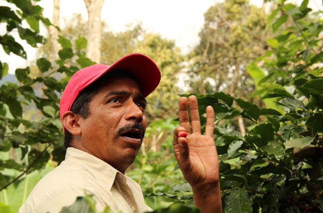 PROCOCER technical advisor Ramon Espinoza explains the importance of strict controls during the harvest season.
