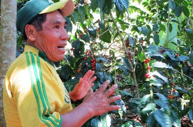"""Located at 1300 -1400 meters, in what's known as the """"Zona Media"""" of Canton Chijchipani,  Esteban Solis and his wife Romalda expect some 140 qq coffee this year from their five-hectare plot."""